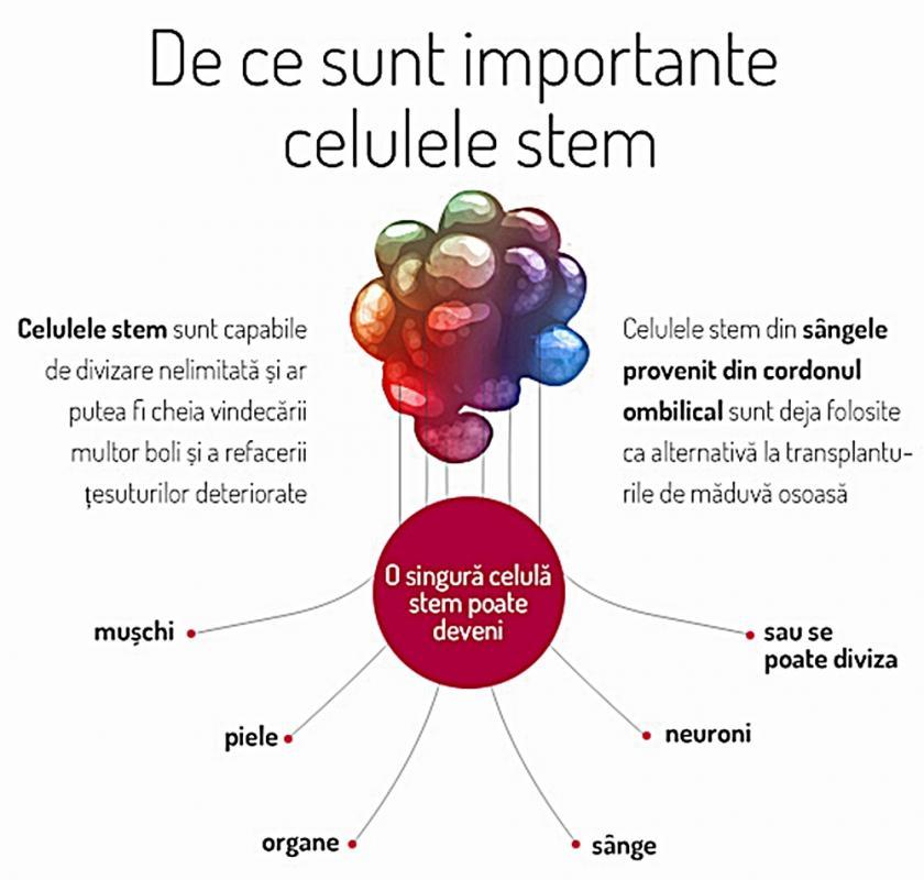 de ce sunt importante celulele stem