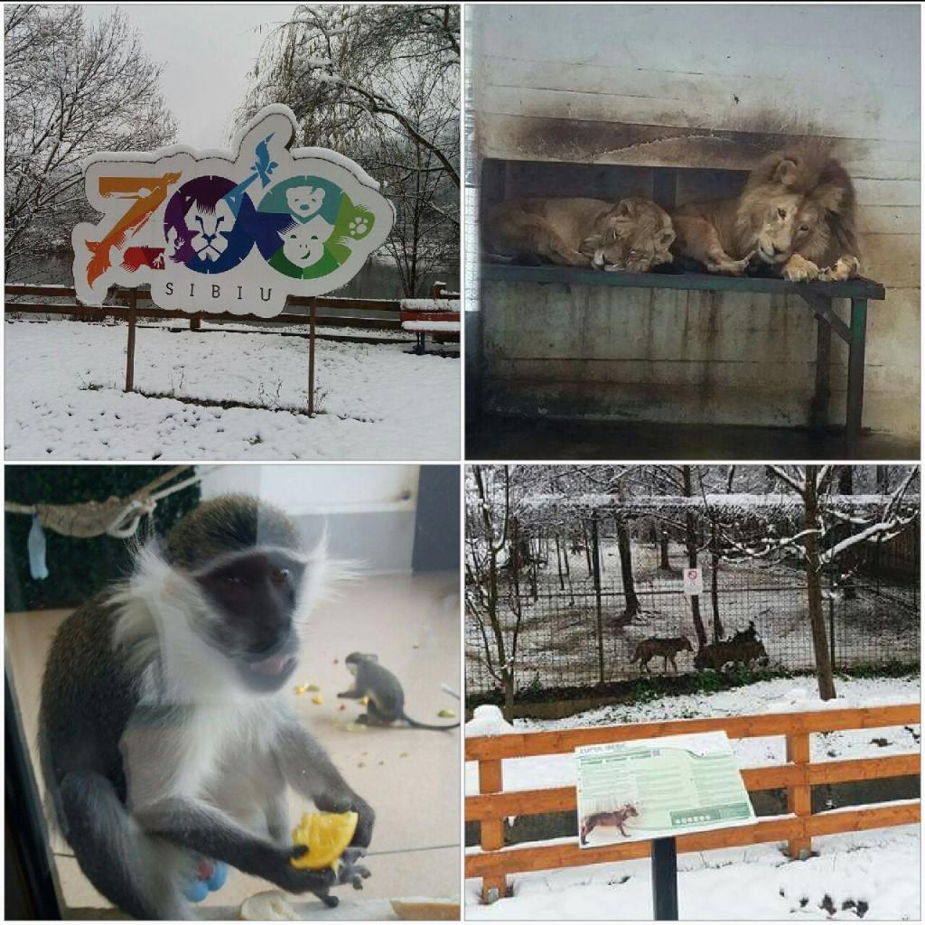 Gradina Zoologica din Sibiu